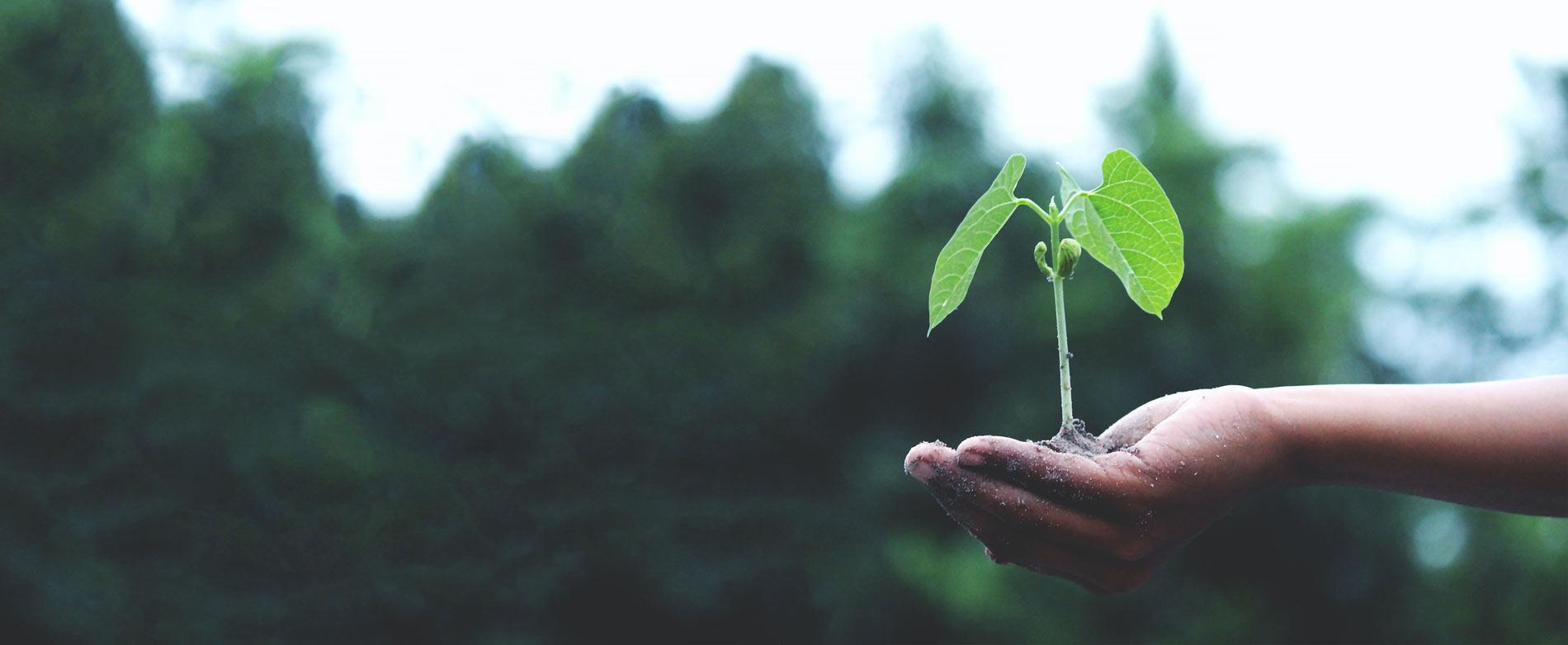 BNE-BOX: Bildung für nachhaltige Entwicklung - Unterrichtsideen